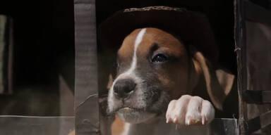 Hund & Katze spielen Indiana Jones