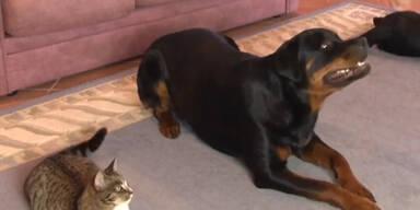 Hund vs. Katze: Der Kampf um die Aufmerksamkeit!