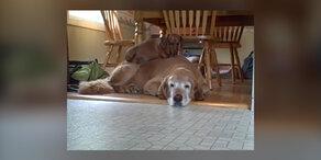 Ungewöhnliches Hundebett