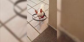 Hilfe für blinden Hund