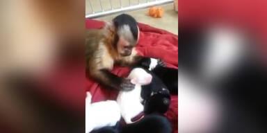 Unglaublich: Affenbaby spielt mit Welpen!