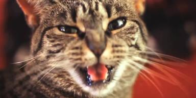 Katze singt harten Rock