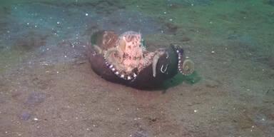 Oktopus entführt Kokosnuss!