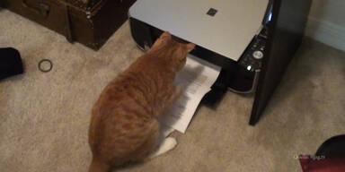 Das Arbeitshindernis Katze