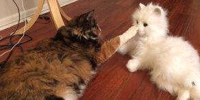 Katzen treffen auf Roboter-Klon