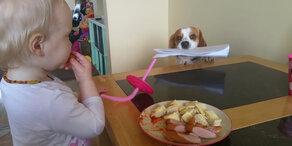 Hund tauscht Spielzeug gegen Essen!