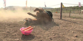 Schlaues Pferd stellt sich tot