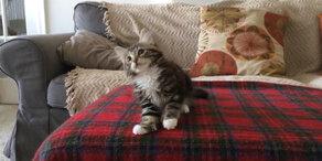 Kätzchen tanzt zu Funk
