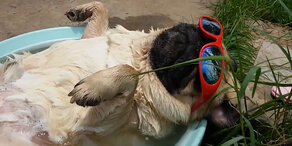 Hund genießt den Sommer