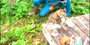 Die Katze von heute lässt für sich jagen