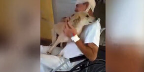 Hund rastet bei Wiedersehen vollkommen aus