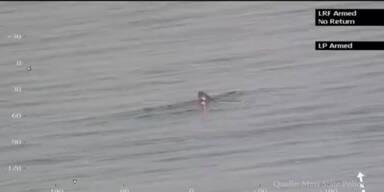 Riesenhai vor der US-Ostküste