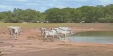 Brasilien zwischen Fluten und Dürre