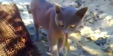 Eidechse beißt sich in Katzenzunge fest