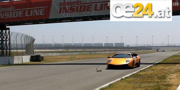 Viral-Hit: Eichhörnchen vs. Lamborghini