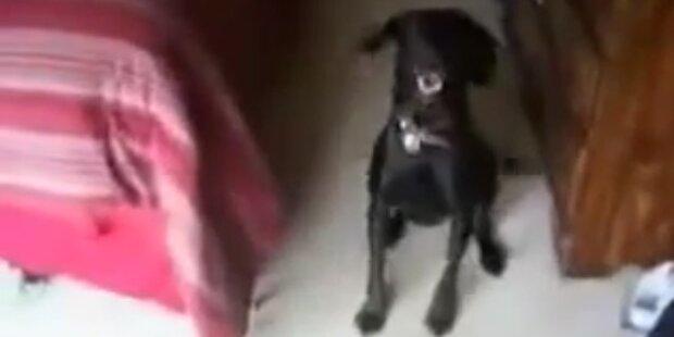 Süss: Hund hat Bade-Phobie
