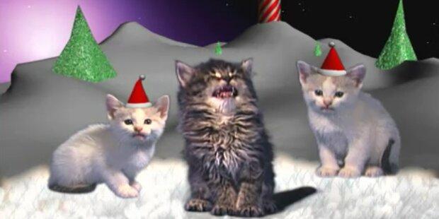 Putzig: Jingle Cats dominieren US-Radios