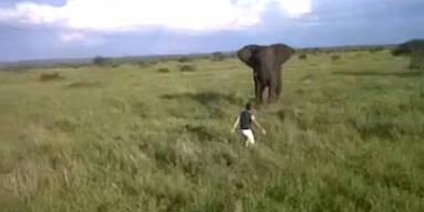 Betrunkener legt sich mit wildem Elefanten an