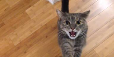 Durchgeknallte Katze!