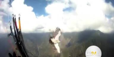 Adler kollidiert mit einem Paragleiter