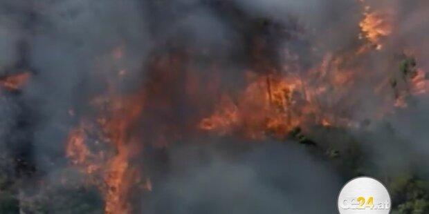 Buschbrände in Australien: Brandstiftung?