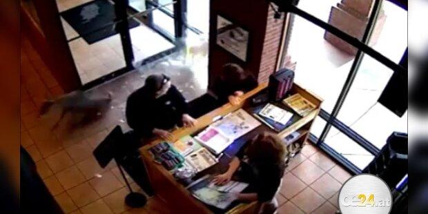 Hirsch springt durch Fenster in Taco Bar