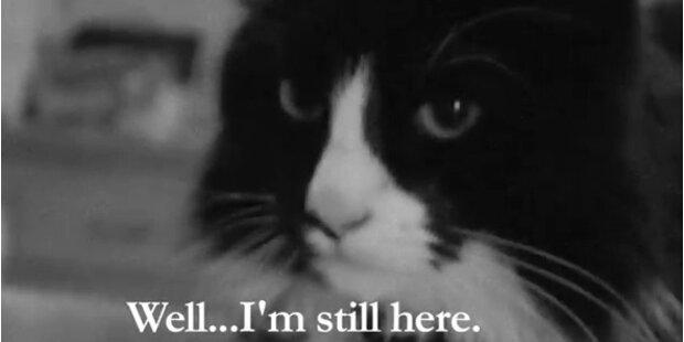 Eigenes Filmfestival für LoL-Cats