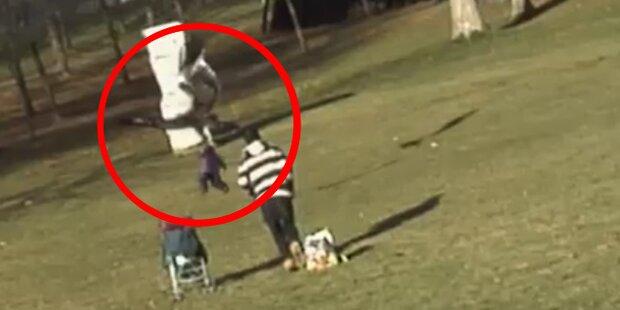 Steinadler packt Kleinkind - Video ist Fälschung