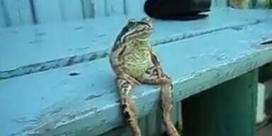 Wie ein Mensch: Frosch hängt auf Veranda ab