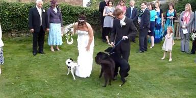 Feuchte Überraschung: Hund bepisst Hochzeitskleid