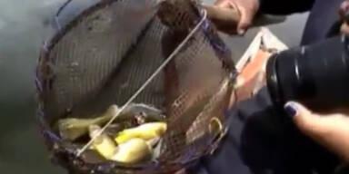 Peru: Tausende tote Fische an Küste gespült