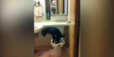 Sehr brav: Hund benutzt Toilette