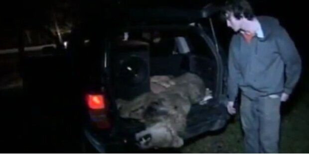 Massaker an Bären und Löwen in den USA