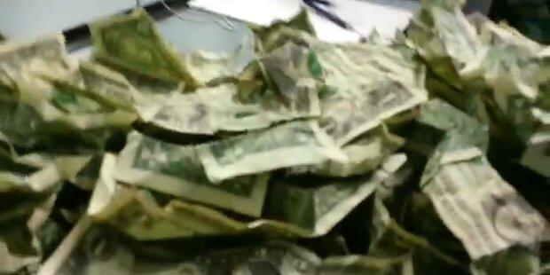 Raser narrt Polizei mit Origami-Schweinchen