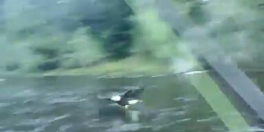 Frech: Seeadler klaut Fisch von der Angel