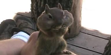 Backenhörnchen beim Backen füllen