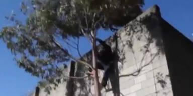 São Paulo: Video zeigt Gefängnis-Ausbruch