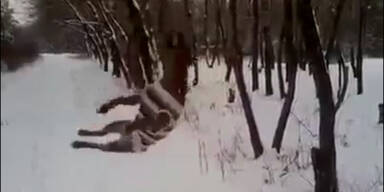Pitbull-Attacke: Hund verbeißt sich in Baum