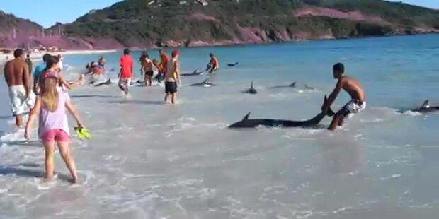 Delfine wurden vor Rio an Land gespült