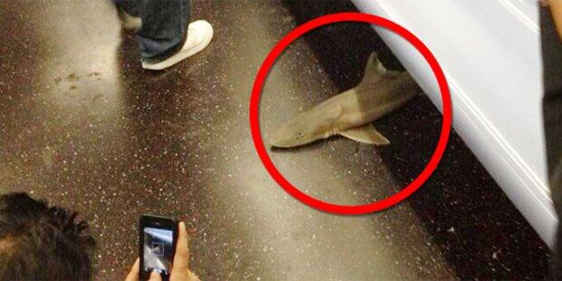 Mysteriös: Hai in U-Bahn gefunden