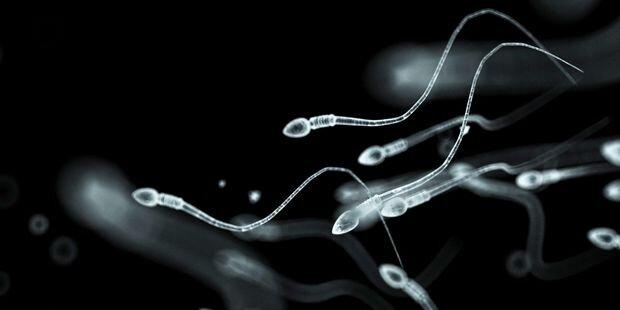 "Handy-Strahlung ""kocht"" Sperma"