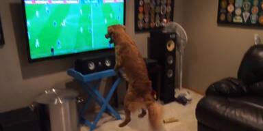 Der Hund wird ganz verrückt bei Fußball