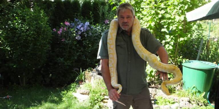 Paar fand Python bei Schwammerl-Suche