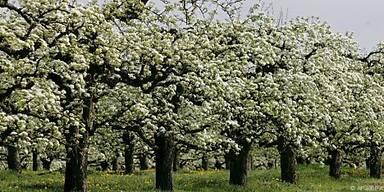 Starke Pollensaison im Süden und Osten erwartet