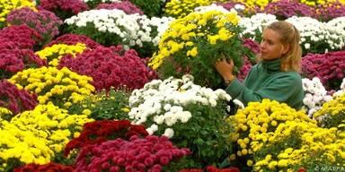 Stattliche und langlebige Gartenpflanzen