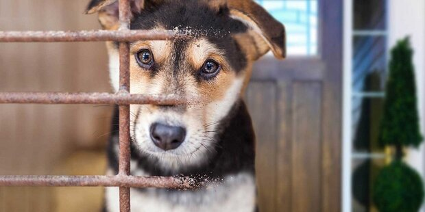 Hunde retten: Adoptieren statt kaufen