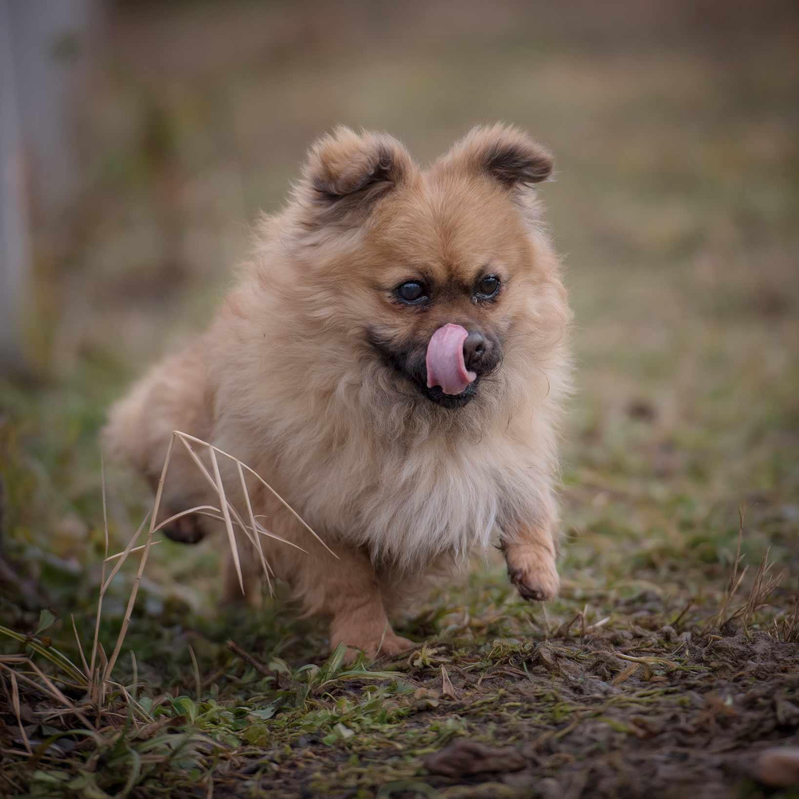 Streunerparadies - ADV - Tierecke - Hund Bommel 2