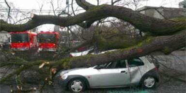 Eine Tote und Verletzte nach Orkan in Deutschland