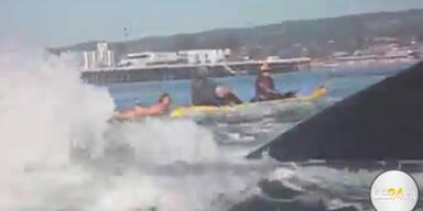 Surferin fast von Wal verschluckt