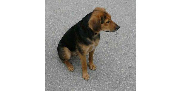 Timo ist der liebste Hund Österreichs